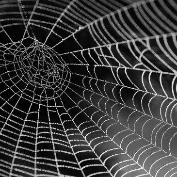 Calmus Web